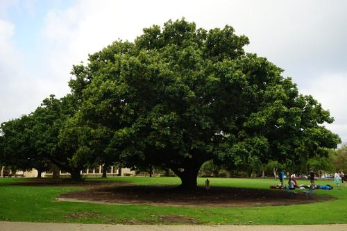 在北卡罗来纳州的沼泽中发现了一棵有着2624年历史的树