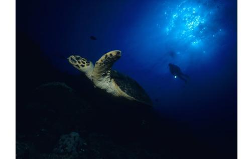 NE美国大陆架在分散到整个西北大西洋之前似乎对海龟有吸引力