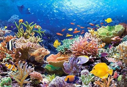珊瑚礁建筑珊瑚是我们最重要的环境条件指标之一