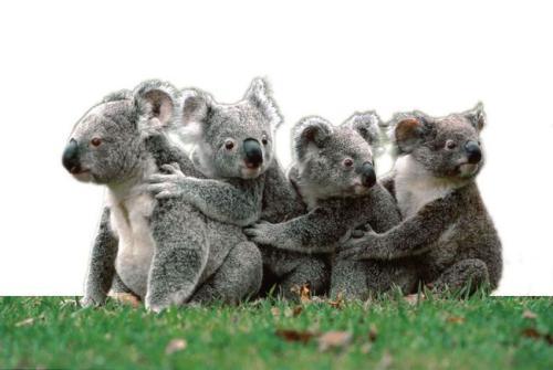 分类澳大利亚保持运行计数每年命名仪表盘上新的澳大利亚物种
