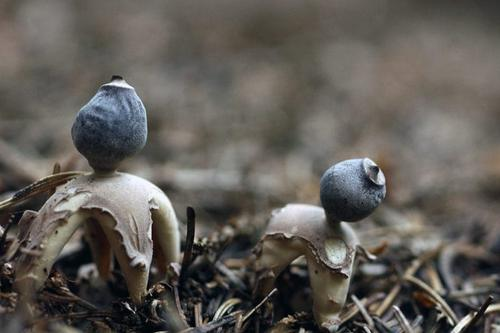 真菌学家兼摄影师艾莉森·保罗继续追求她的激情