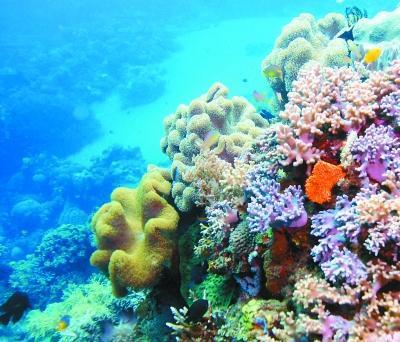 新研究为恢复地球上最大的珊瑚礁提供了很少的希望