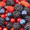 用草代替肥料解决了与浆果进化相关的营养问题