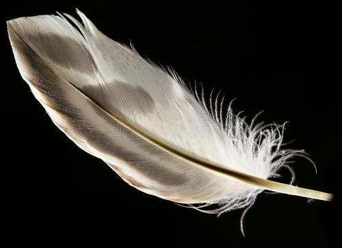 鹦鹉独有的化合物会产生明亮的羽毛但环境决定了哪些