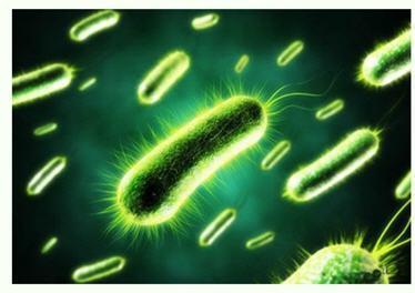 研究人员密切关注利用细菌的电力