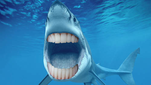 遇见Galagadon一个有着牙齿的古老鲨鱼