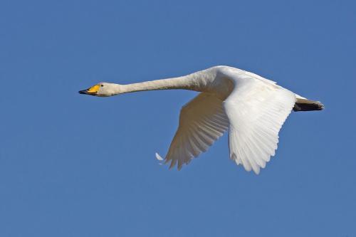 被认为是毛茸茸的古代飞行脊椎动物实际上是羽毛状的