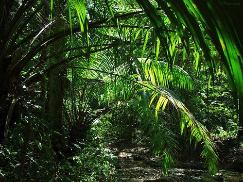 Studio Saxe在哥斯达黎加的Jungle Frame House内创造了热带中庭