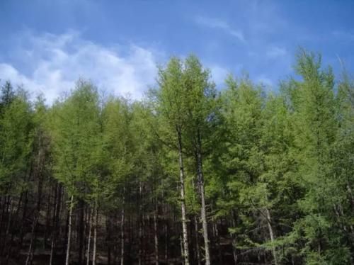 贝尔纳多·贝德在奥地利山区的混凝土基座上栖息着落叶松覆盖的房屋