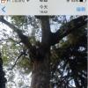 科普iPhone 6如何才能显示更大缩略图默认的很小及iPhone6手机怎么快速刷新App Store