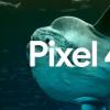 Pixel 4a与iPhone 9:谷歌和苹果即将推出的廉价手机比较